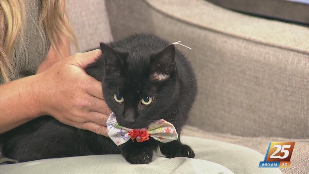 Pet Of The Week: Frankie