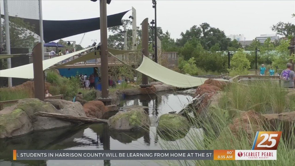 New Mystery Residents At The Mississippi Aquarium