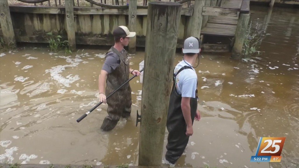 Ocean Springs Aquaculture Students Release Fish In The Wild
