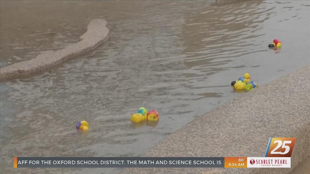 Rubber Duck Race At The Mississippi Aquarium