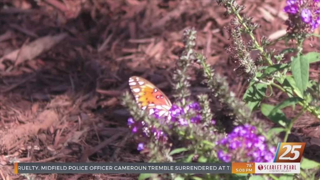 Butterfly Garden Opens At Keesler To Honor Fallen Soldiers