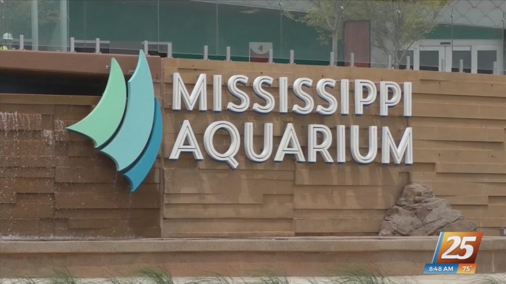 Mississippi Aquarium Hosting 'sea Of Stars' Event To Kick Off Cruisin' The Coast