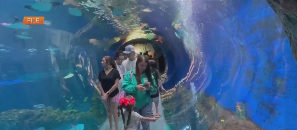 Mississippi Aquarium Collecting Items For Hurricane Ida Victims