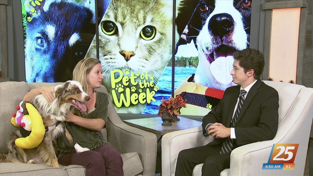 News 25 Pet Of The Week: Carlisle Is Looking For A Forever Home!