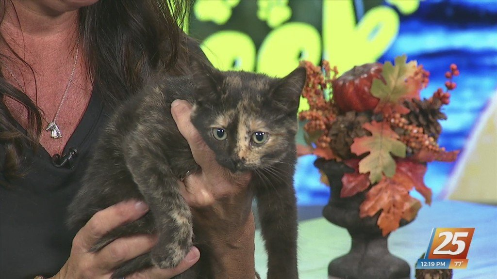 News 25 Pet Of The Week: Slinky Is Looking For Her Forever Home