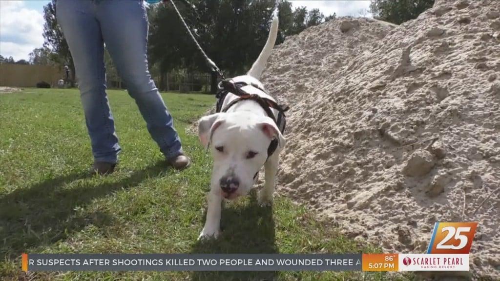 Local Animal Rescue Begins Constructing Dog Paradise