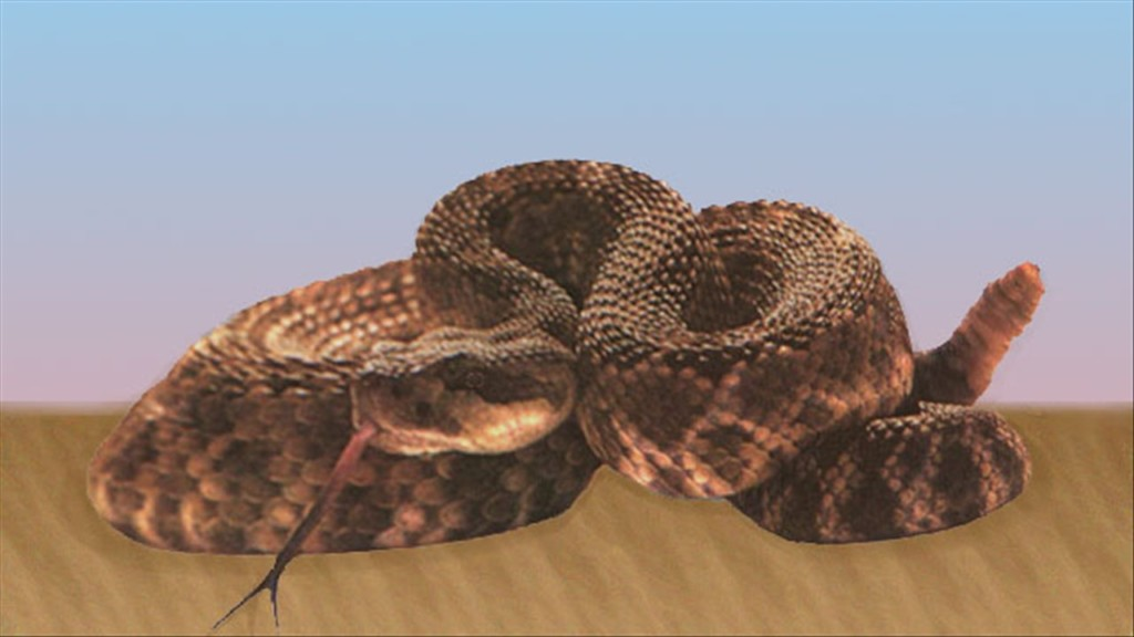 Rattlesnakes come out of hibernation in the Tri-Cities