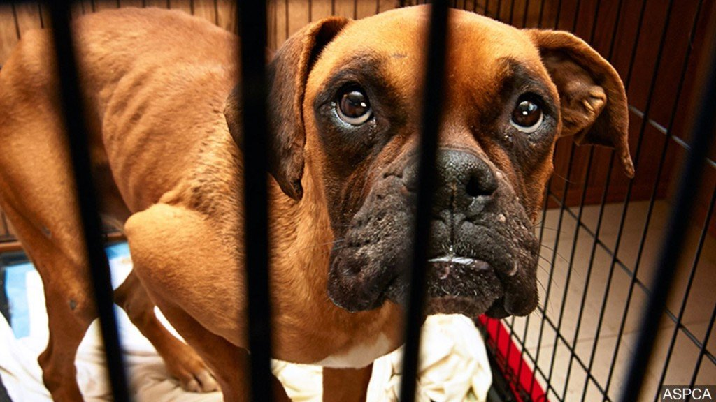 Tri-Cities Crime Stoppers launches program to prevent animal abuse