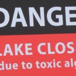 Avoiding toxic algae: what you should look out for