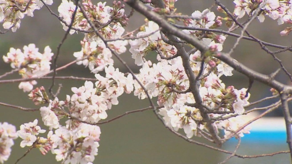 Allergists predict this spring will bring more allergies