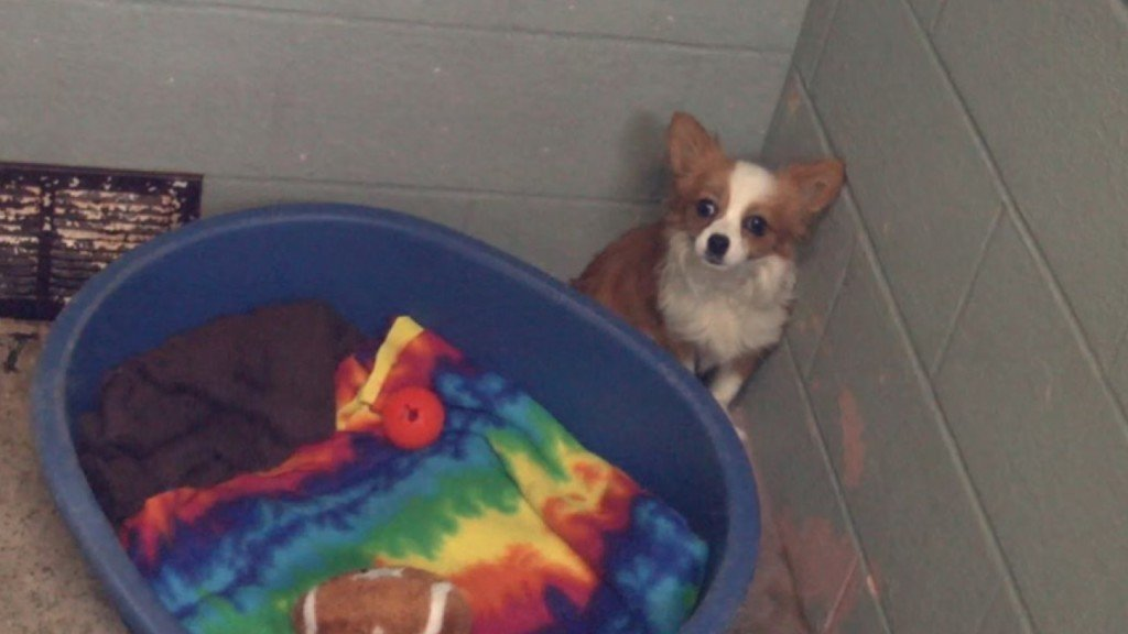 City of Pasco planning to build new animal shelter