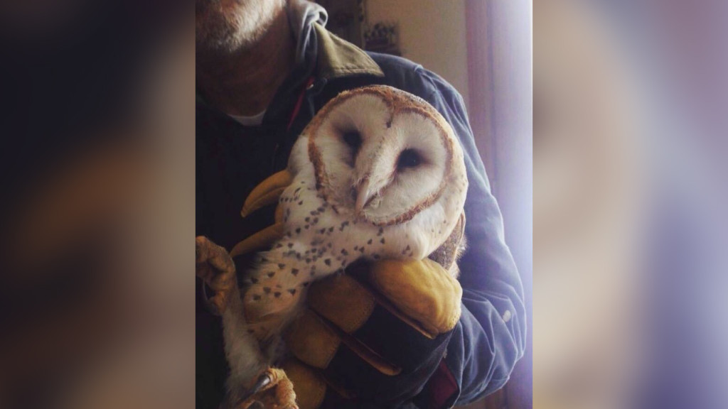 Family outside Selah tries to save freezing barn owl
