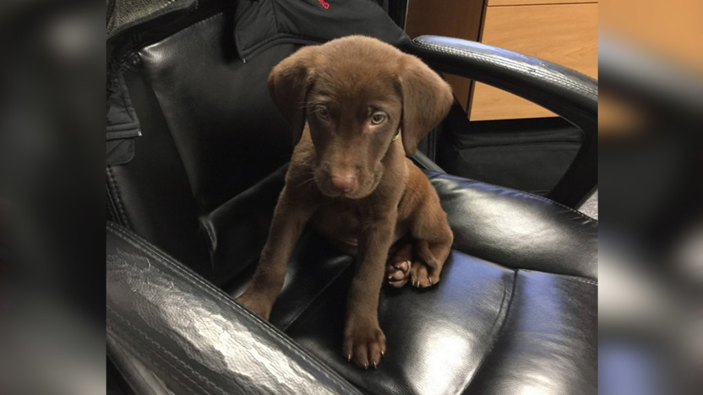 Moses Lake School District welcomes a new therapy dog