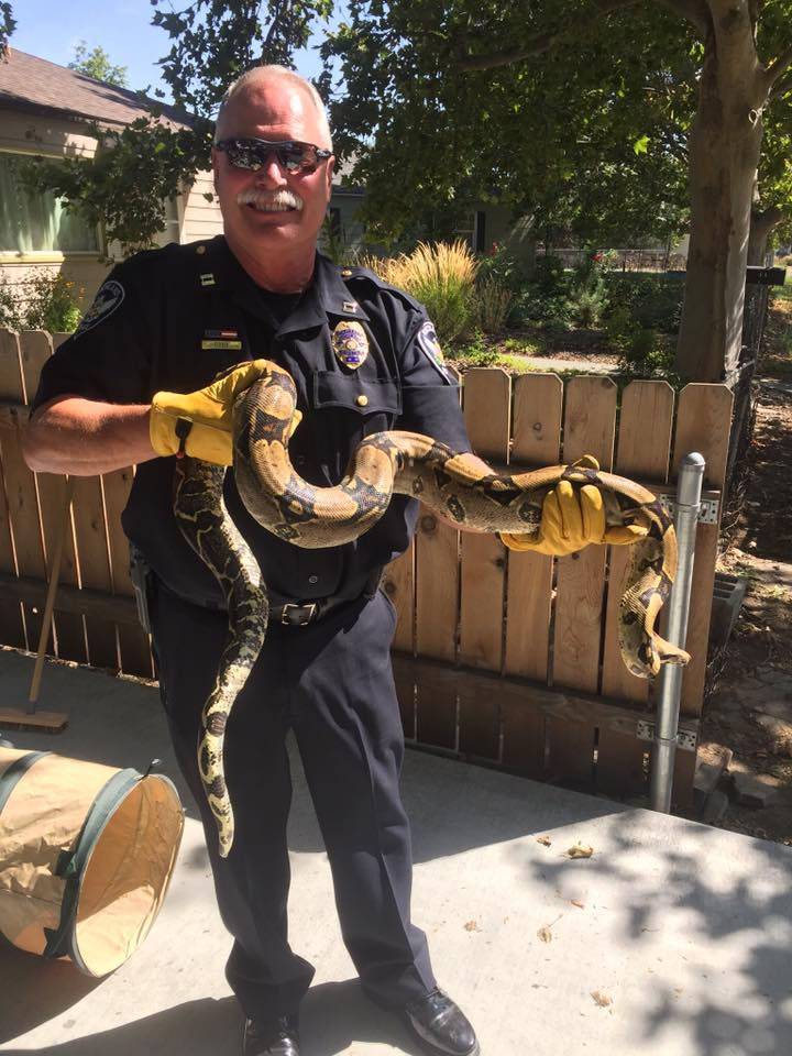 Richand police return pet snake missing for 2 days to its owner