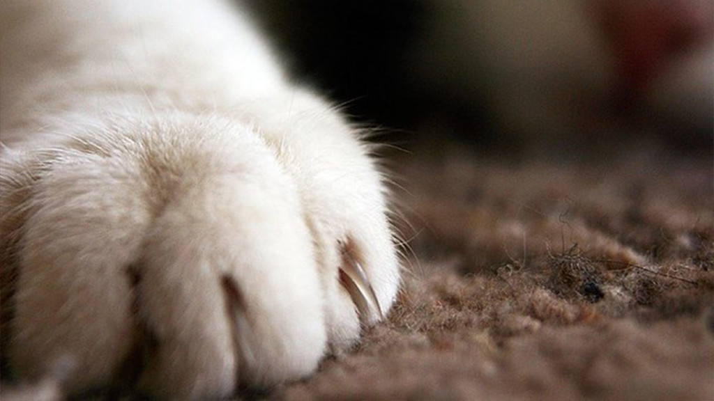 New York becomes first state to ban cat declawing