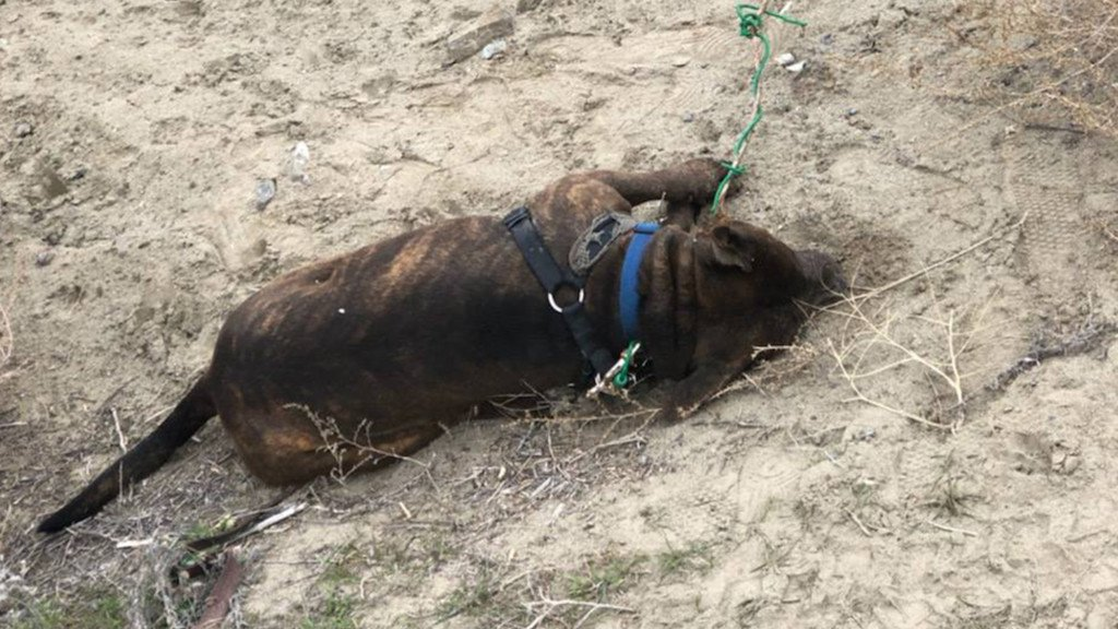 Dog found dead after being tied to pole, abandoned