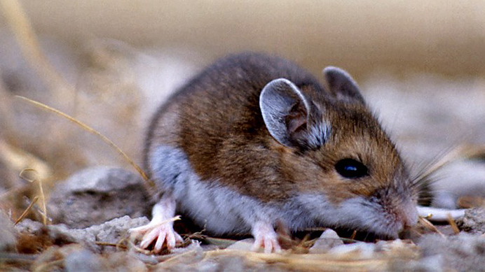 Grant County confirms state's first case of hantavirus this year