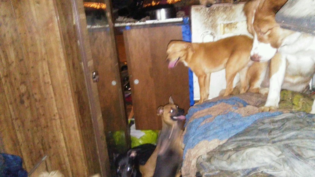 Yakima animal control rescues 34 dogs, 2 chickens