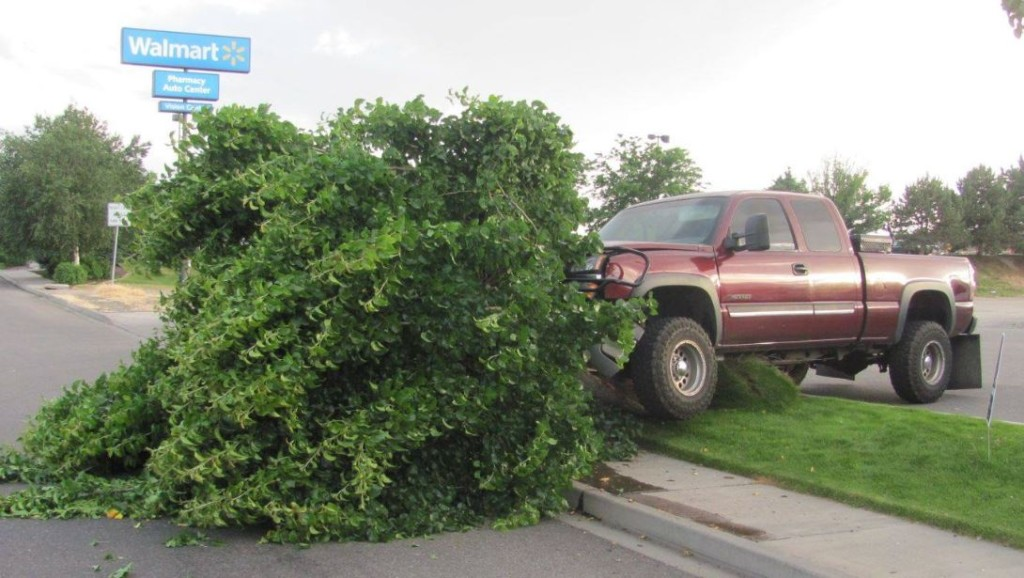 Driver plows stolen truck into tree, flees from scene