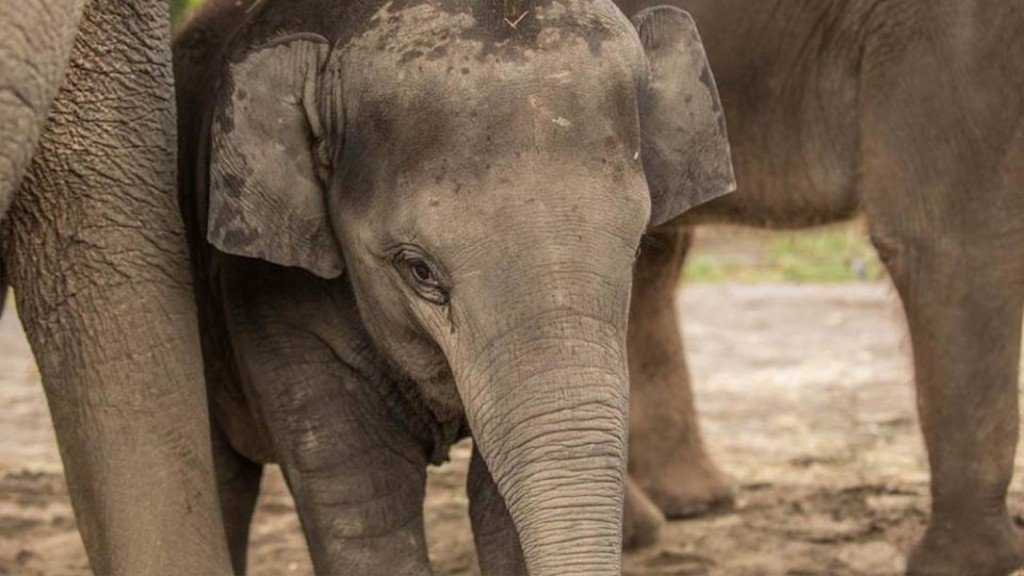 Oregon Zoo's youngest elephant dies suddenly