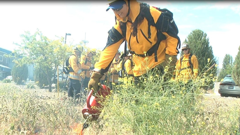 Tri-City fire recruits clear dry brush surrounding 911 center