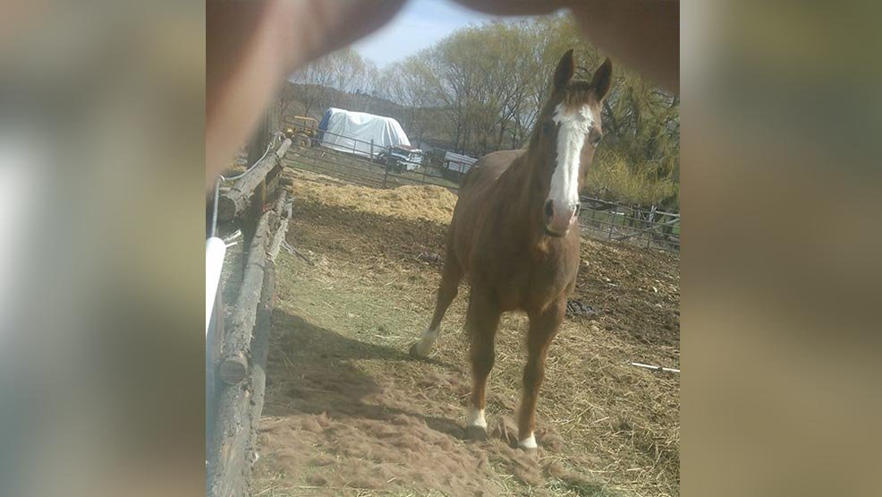4 dogs kill horse in vicious attack in Yakima County