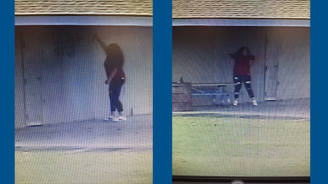Layton Park vandalism suspect caught on camera