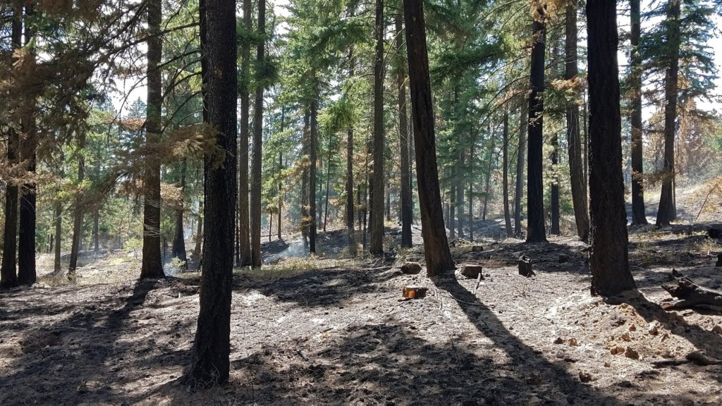 Left Hand Fire: More than 3,000 acres burned, price tag above $7.6 million