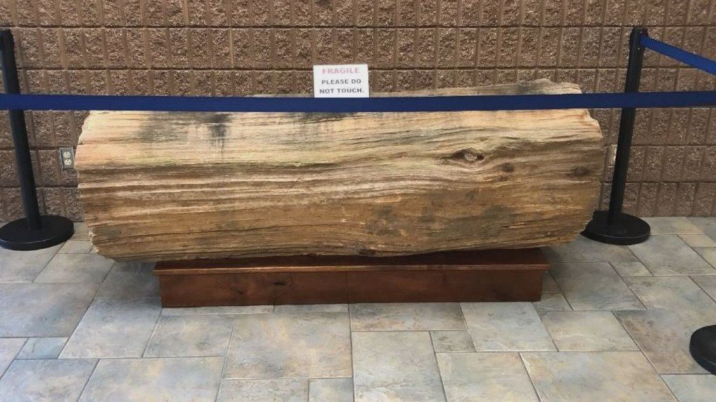 Alumni donate 3,400 lb. petrified log to Columbia Basin College