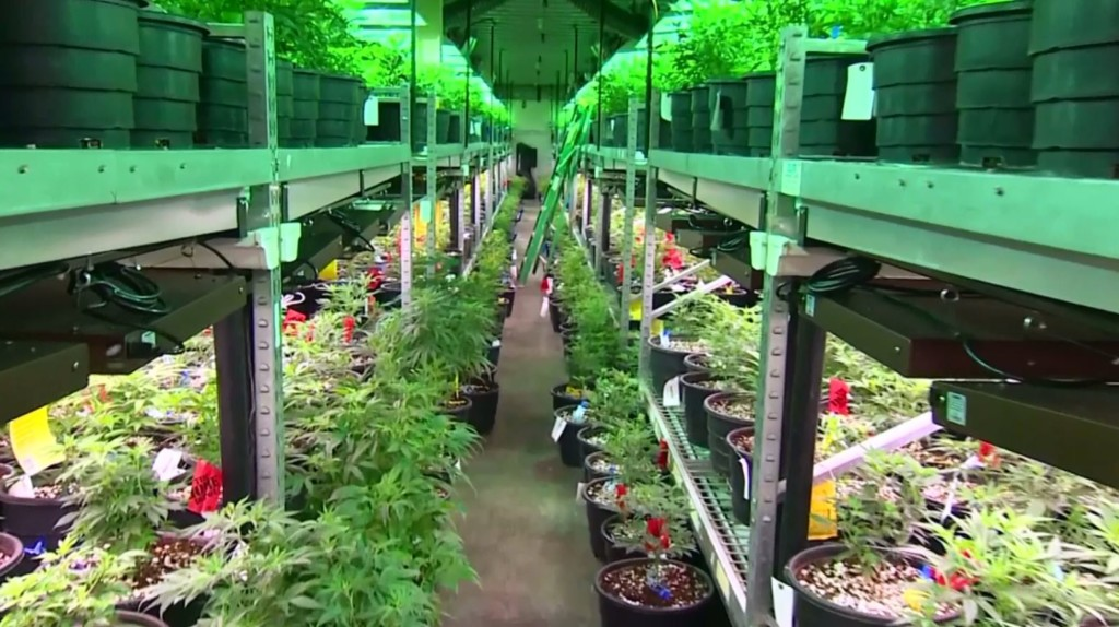 A budding business: pot sales open up in Eastern Oregon