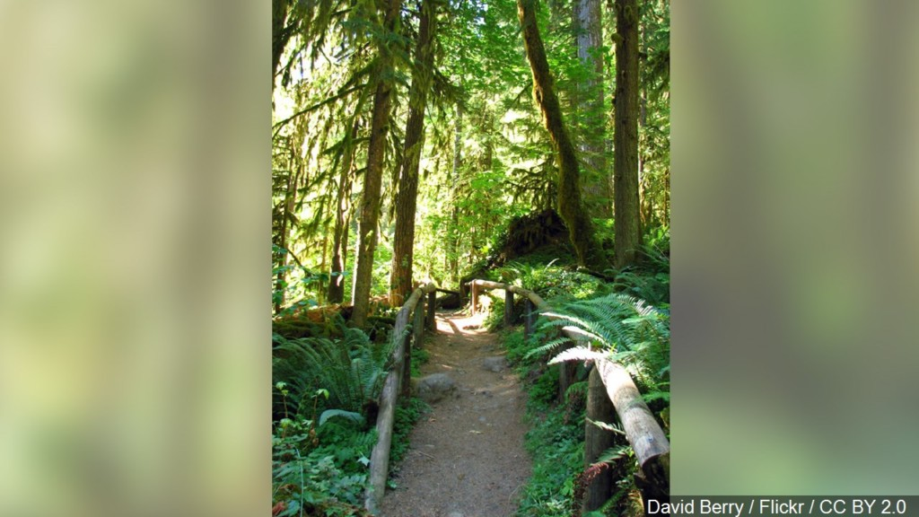 Parking fees waived at all Oregon state parks for 'Green Friday'