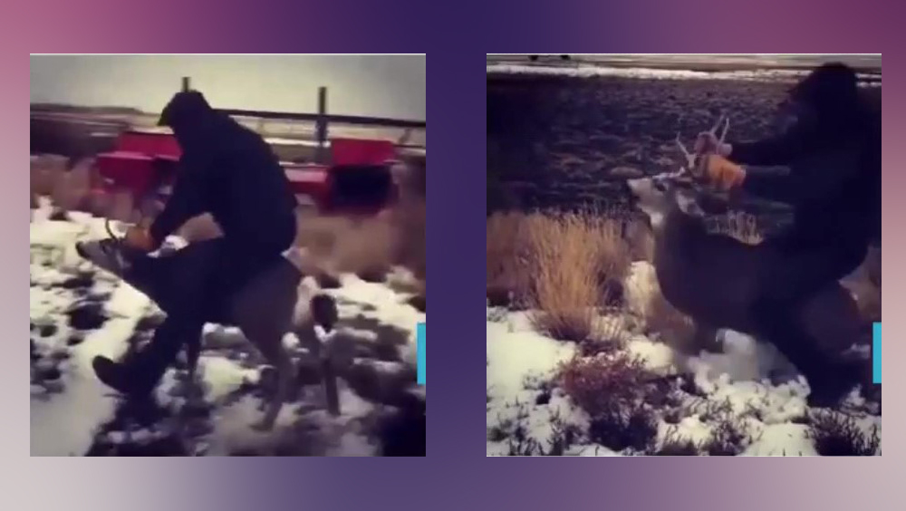 Oregon man accused of riding 'live and exhausted' deer arrested
