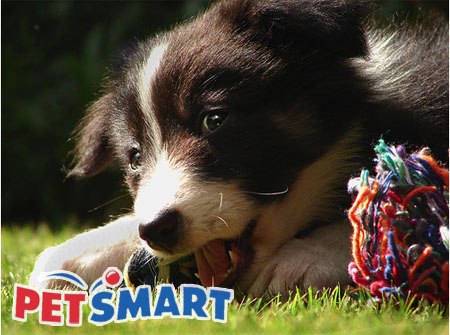 Petsmart's annual adoption event continues until 4:00 p.m. in Kennewick
