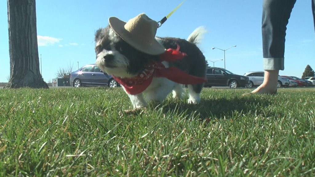Hundreds of dogs will dress as cowboys for the annual Pooch & Pal Fun Run