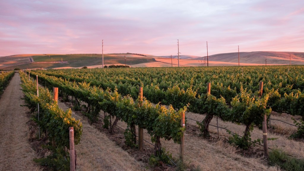 Walla Walla Valley nominated for Wine Region of the Year