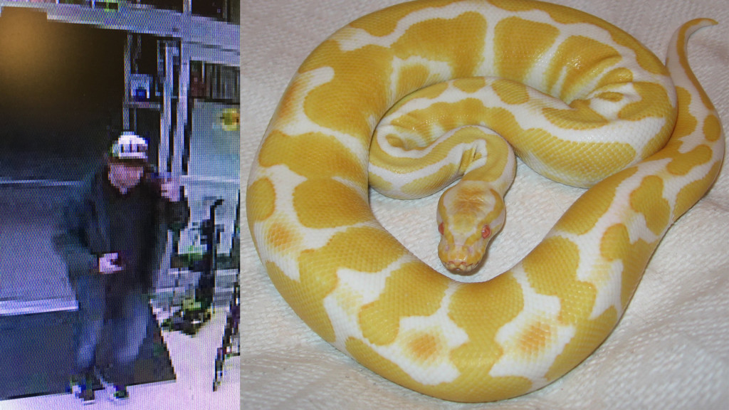 Man steals pythons worth $600 from Petco in Richland