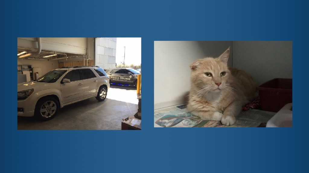 Cat stealing auto theft suspect booked in Pasco