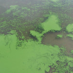 ScooteneyReservoir closed in Franklin Co. due to toxic algae