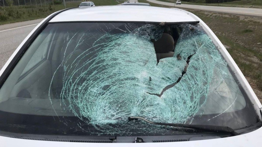 Turkey crashes through car windshield near Athol, driver sent to the hospital