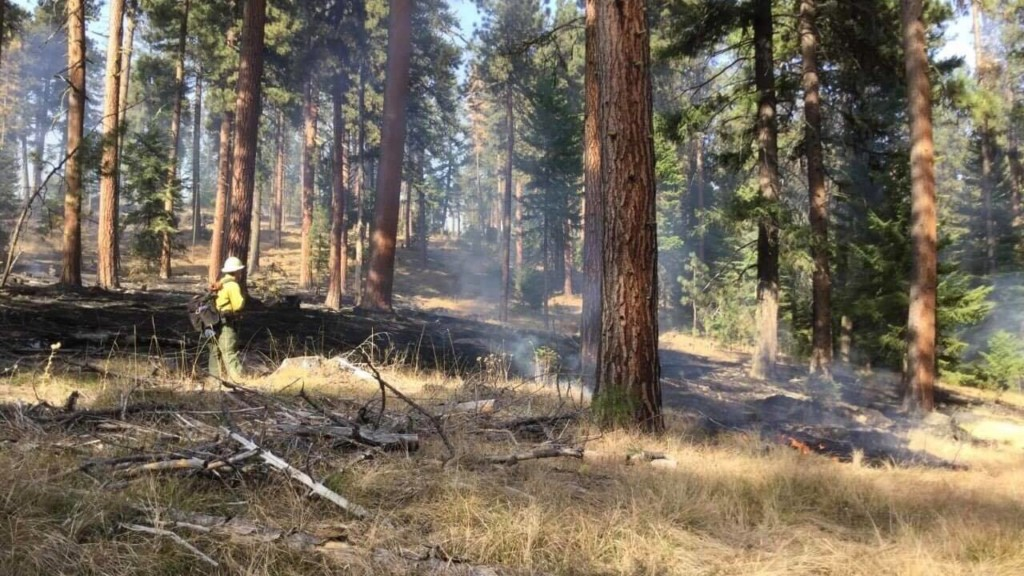 Firefighters battling several new fires in Umatilla National Forest