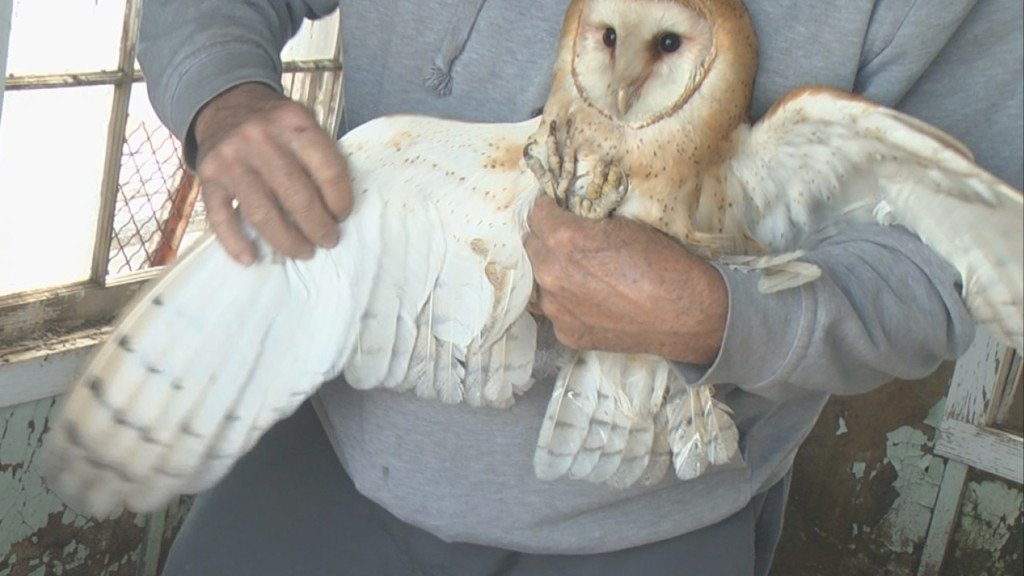 Owl whisperer returns to meet PNW hatchlings