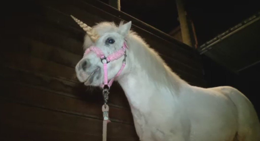 Pony leads California police on a wild unicorn chase