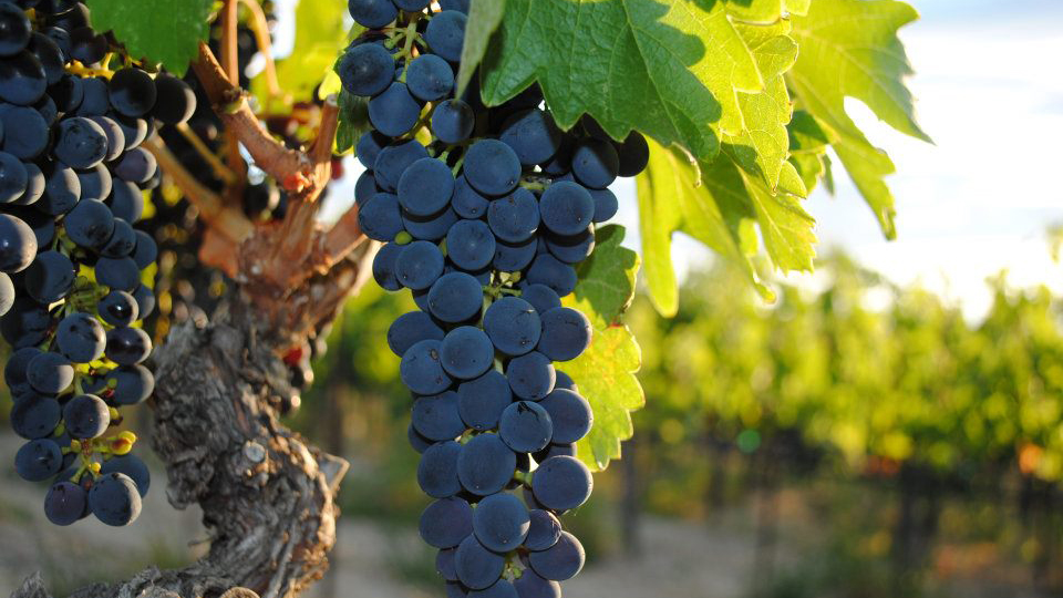 WA bill allowing wine tasting for underage viticulture students passes House