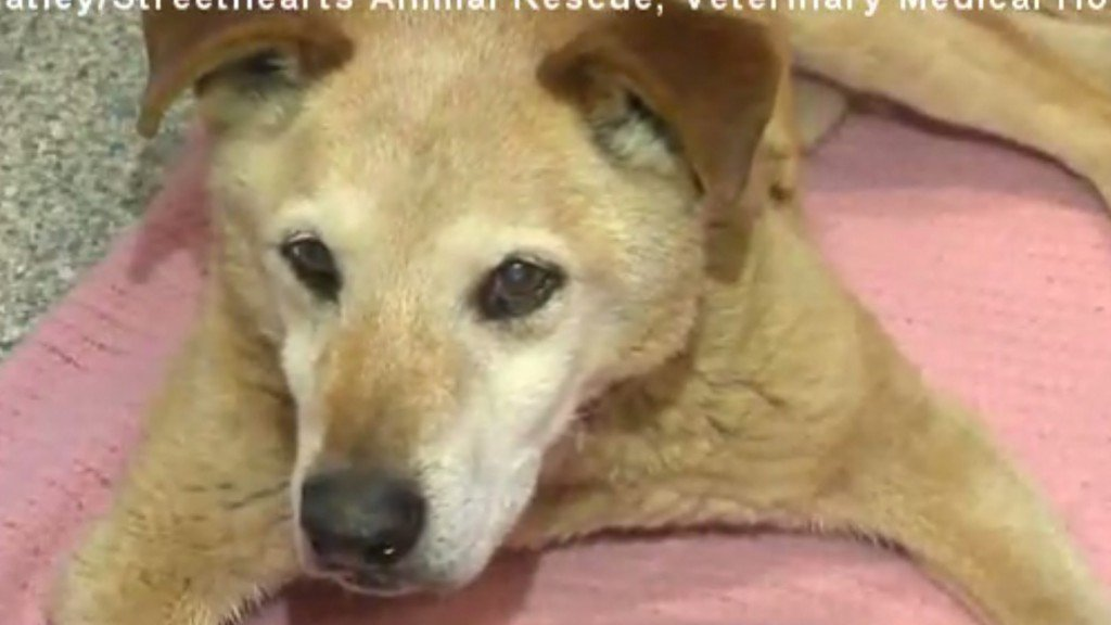 Rescue group finds dog frozen to ground