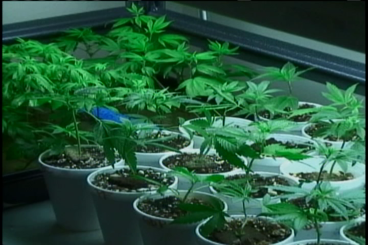 Medical Marijuana Dispensaries Forced To Close By July 2016