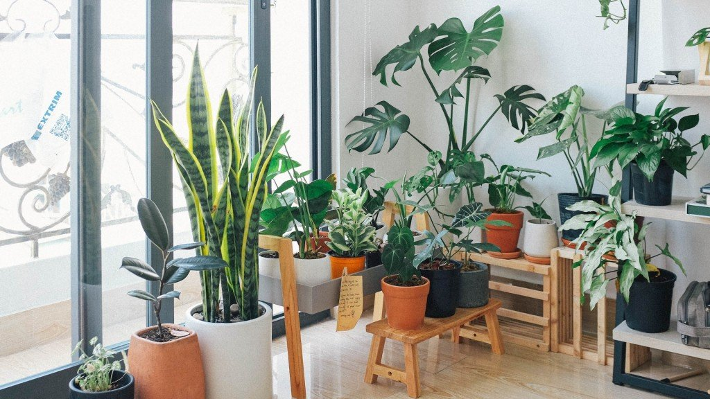 Houseplants are great, but they don't clean air