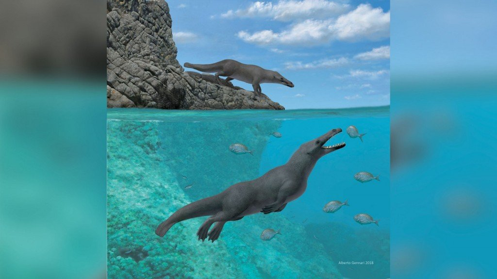 Ancient whales walked on four legs and moved like giant otters