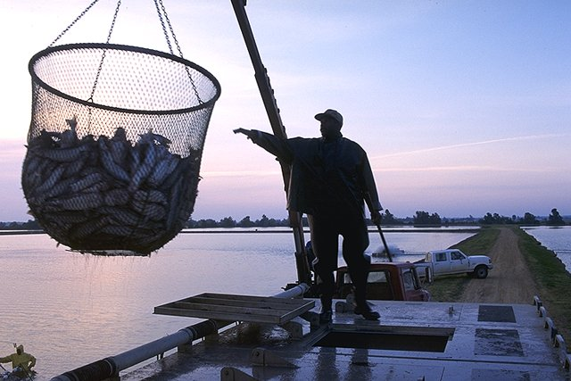 New State Rules on Fish Consumption