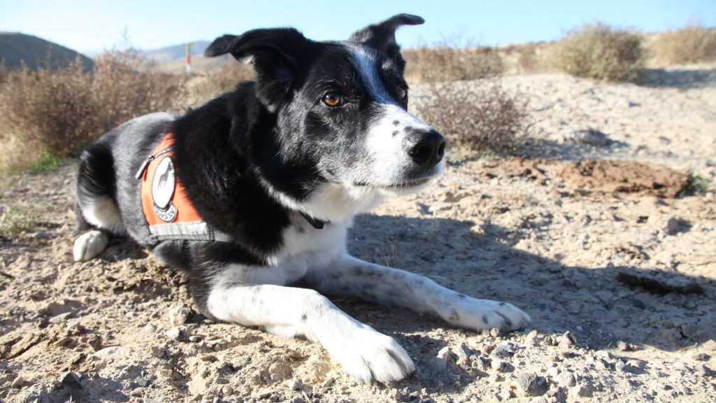 How conservation dogs help track endangered species