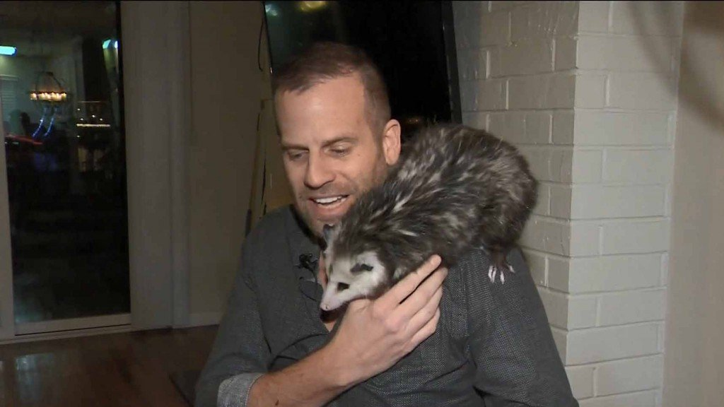 Man traveling with pet opossum runs into issues getting back home